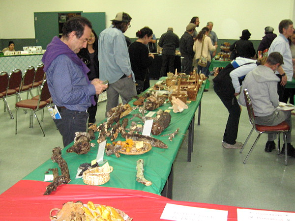 Several tables exhibited different types of mushrooms one might encounter in nature. The San Diego Mycological Society puts the fun in fungus!
