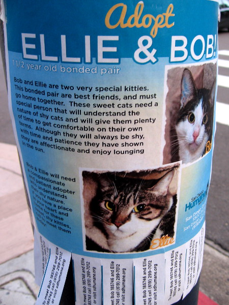 Adopt Ellie and Bob! These special kitties are best friends who seek a compassionate human who understands the nature of shy cats.