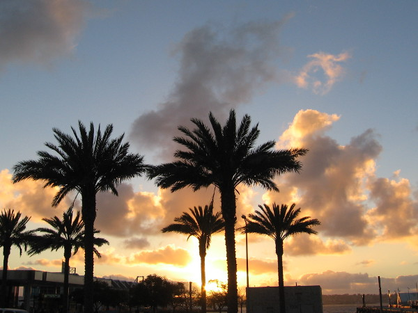 A blazing orange and yellow sunset behind palm trees on San Diego's Embarcadero.
