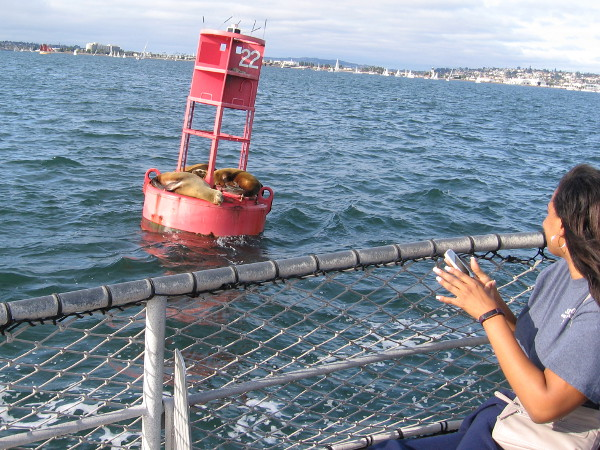Yay! We get to slow down to photograph sea lions sleeping on a harbor buoy.