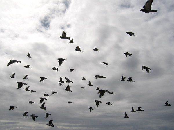 Many birds in flight.