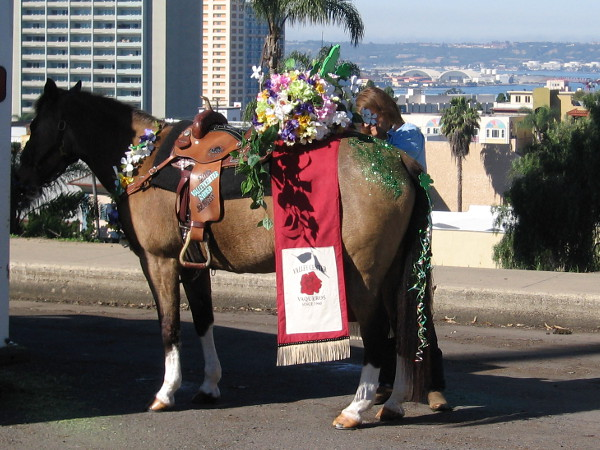 A horse is prepared in a corner of Balboa Park for San Diego's annual St. Patrick's Day Parade along Sixth Avenue.
