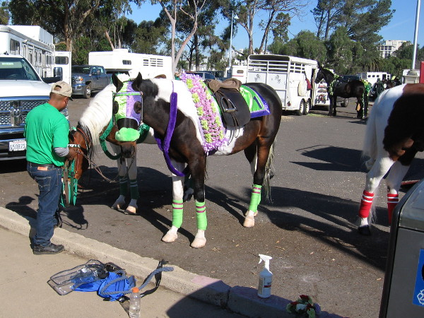 Both horses and riders would be wearing green today during the parade.