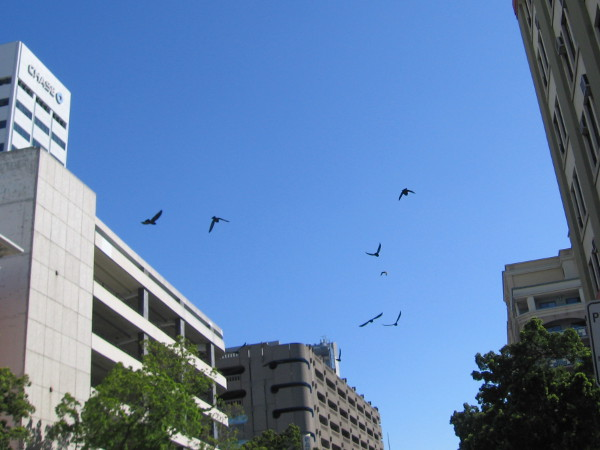 Birds fly in a blue downtown San Diego sky.