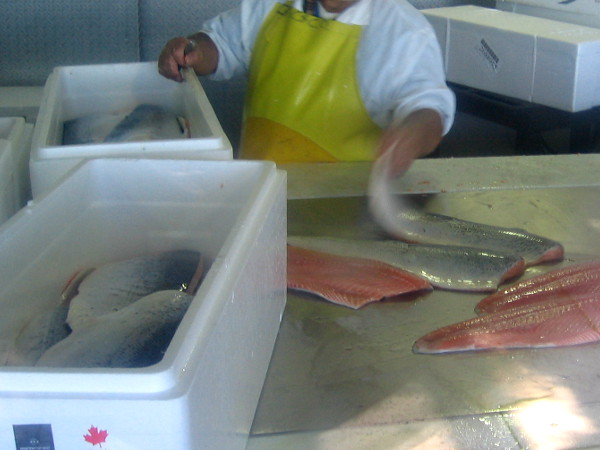 Worker inside the processing window at Chesapeake Fish packages fresh local catch. Their seafood products are used by nearby restaurants and shipped around the world.