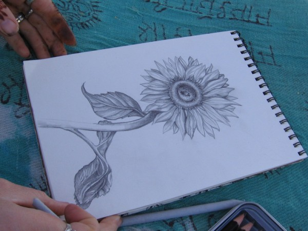 This elegant drawing of a sunflower stopped me in my tracks. Patience combined with talent.
