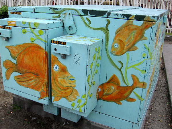 More garibaldis on a large electrical box near Mission Beach's famous roller coaster.