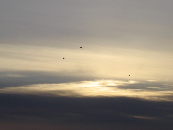 Birds above one last burst of sunlight.