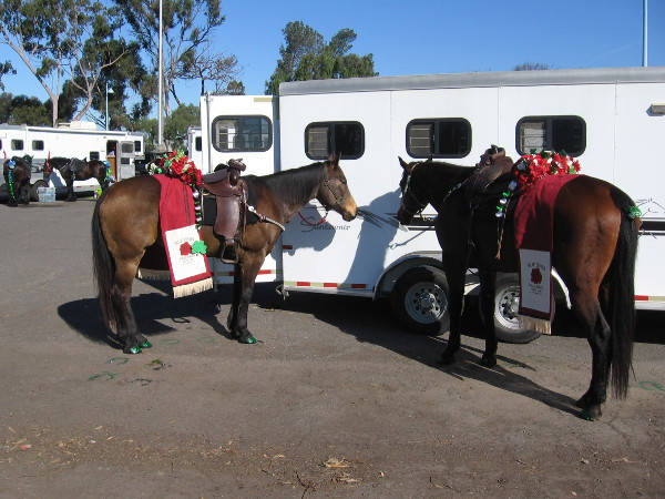 A couple of horses from Valley Center wait by a trailer for the start of the parade.