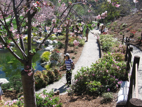 Spring cherry blossoms line the walkways and the gentle stream that runs through the garden's canyon.