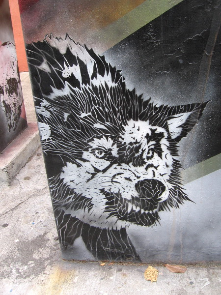 Arresting street art in Normal Heights. A snarling wolf.