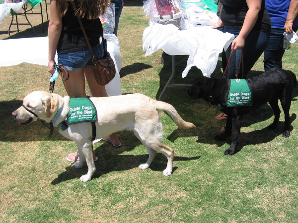 Loving, intelligent guide dogs and their trainers attend a special event in San Diego.