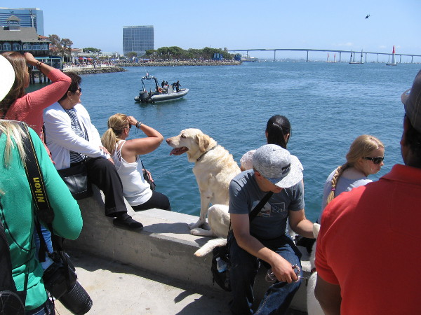 The dog was enjoying the sunny San Diego day as much as the humans.
