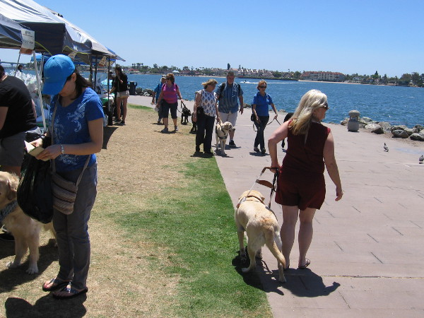 Guide Dogs for the Blind had a special gathering today at Embarcadero Marina Park North.