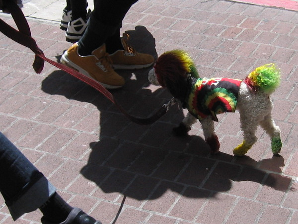 Reggae Dog!