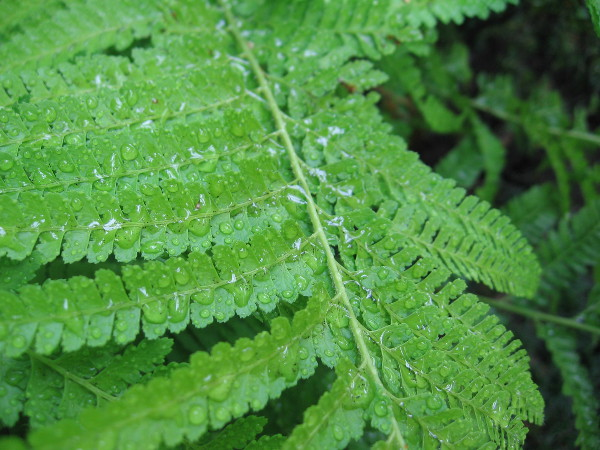 Droplets on a fern, like a curtain of beaded diamonds.