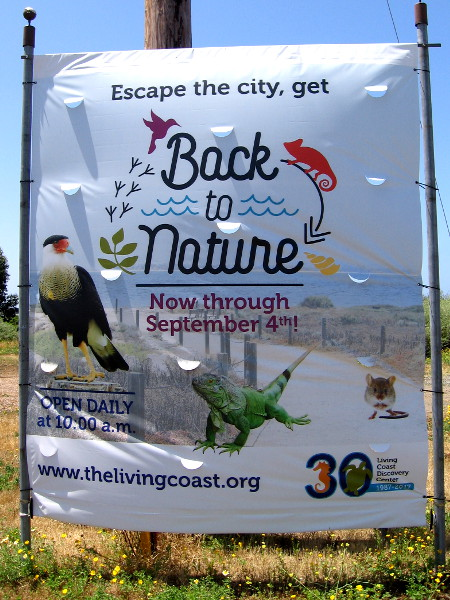 The Living Coast Discovery Center, located in the Sweetwater Marsh Unit of the San Diego National Wildlife Refuge, is where to get Back to Nature.