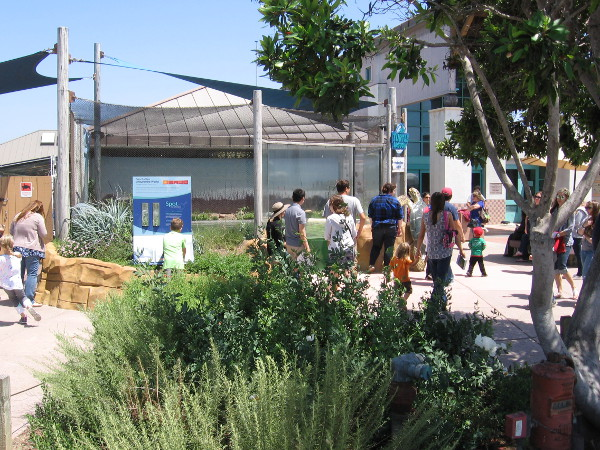 People near the green sea turtle exhibit at the front of the Living Coast Discovery Center.