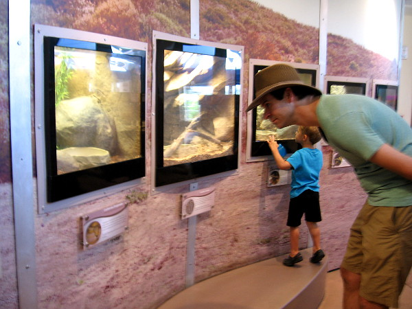 Many species of reptiles, amphibians, invertebrates and fish are on display inside the small center. There's even a mouse house popular with kids.