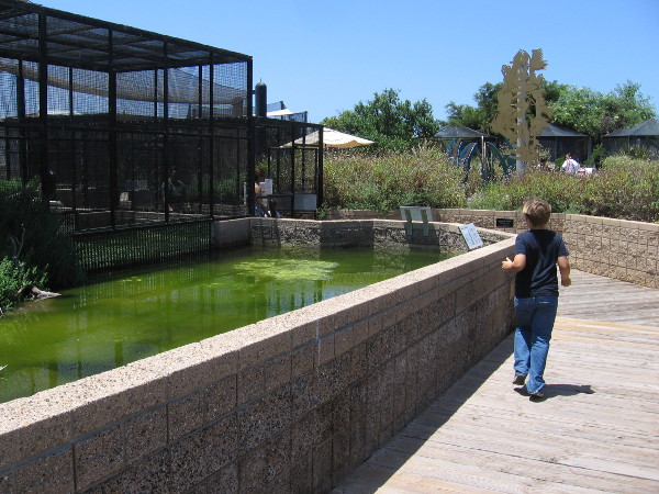 Enclosures in the aviary area contain clapper rails, shorebirds and ducks.