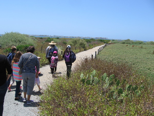 Hiking through Chula Vista's protected Sweetwater Marsh on a sunny day. It's mid-May and the once green and flowering plants have begun to dry out.