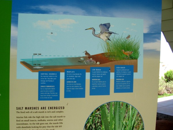Different forms of life can be found in subtidal channels, mudflats, the low march and high marsh. The changing tide allows birds to feed and varied species to thrive.