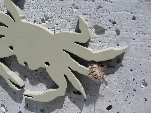 The representation of a crab underneath the bronze shorebirds is being visited by a living creature.