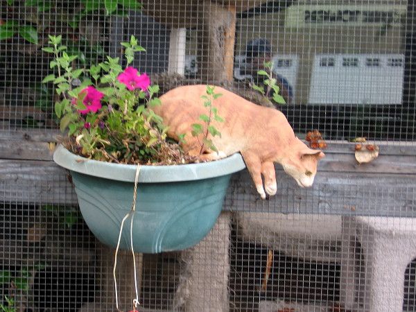This realistic cat is ready to jump from a flower pot.