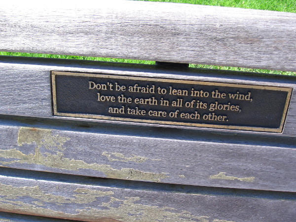 Words on one bench. Don't be afraid to lean into the wind, love the earth in all of its glories, and take care of each other.