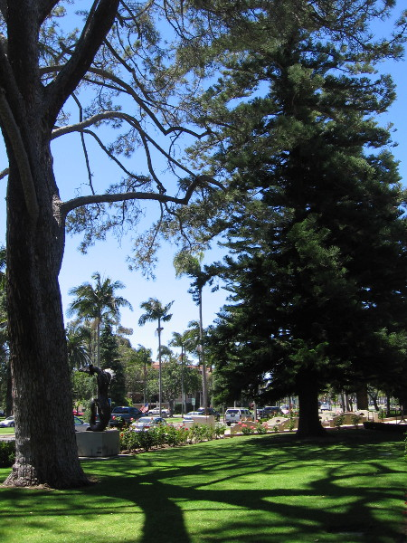 The big Torrey Pine on the left of this photograph is a Coronado Heritage Tree.