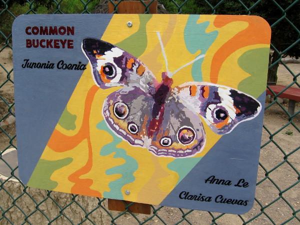 Common Buckeye. Anna Le and Clarisa Cuevas.