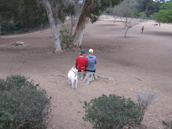 Three friends together at Nate's Point Dog Park.