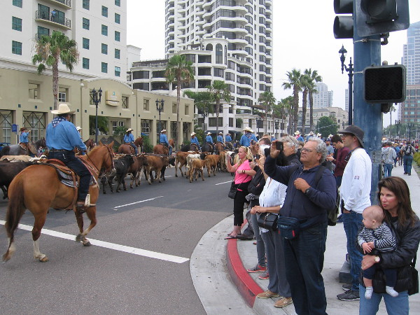 The downtown cattle drive will head along Harbor Drive, turn north up Fifth Avenue, then back head west along Market Street.