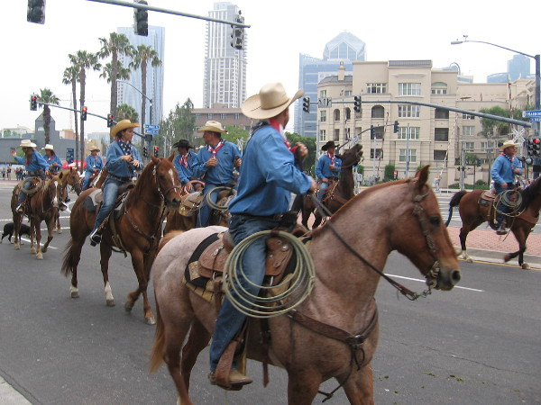 Cowboys keep a close eye on the cattle as they head along San Diego's waterfront.
