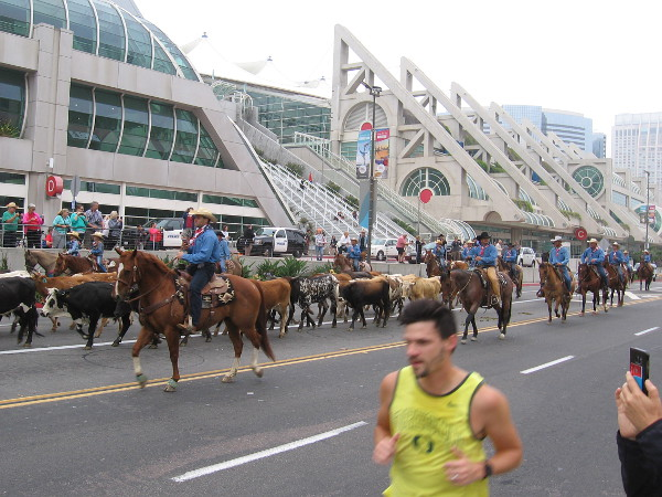 The cattle drive heads past the San Diego Convention Center. So does a disinterested jogger.