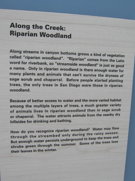 Along Tecolote Creek lies the Riparian Woodland habitat. Water attracts animals from the dry hills, and native trees like willows, cottonwoods and sycamores grow on the creek's banks.