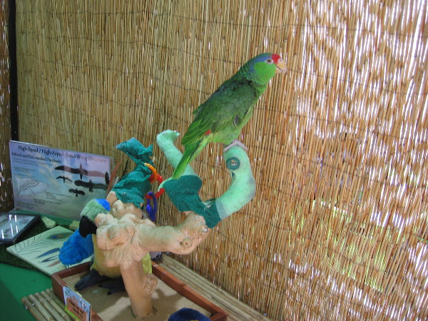 A friendly parrot was at a booth promoting Zovargo, a local company which offers animal summer camps for kids.
