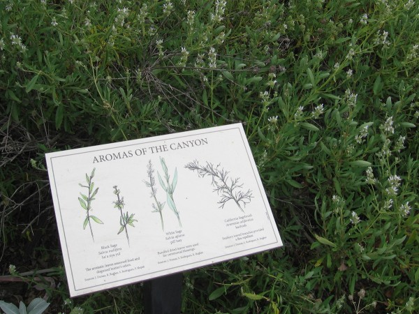 Several signs can be found around a small native garden. This one, Aromas of the Canyon, depicts Black Sage, White Sage and California Sagebrush.
