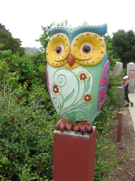 On the way to the hiking trail that leads into Tecolote Canyon, one might spot this owl!