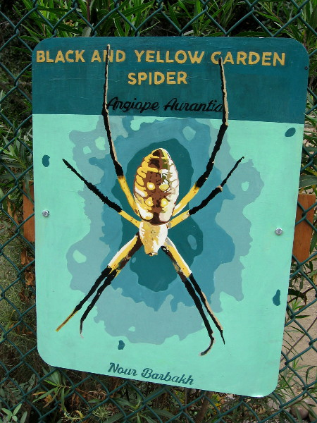 Black and Yellow Garden Spider. Nour Barbakh.