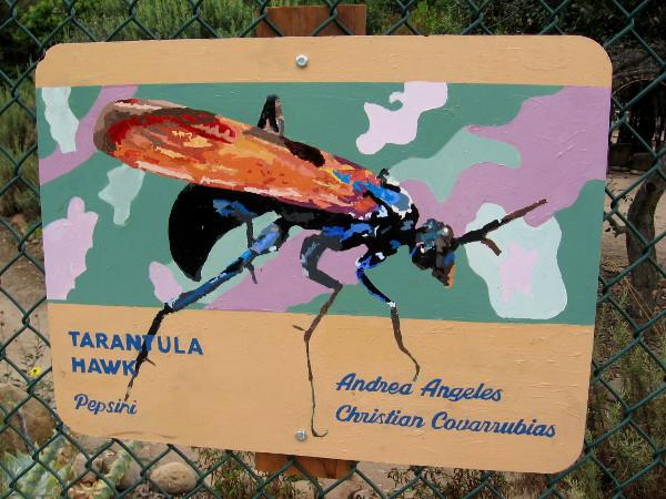 Tarantula Hawk. Andrea Angeles and Christian Covarrubias.