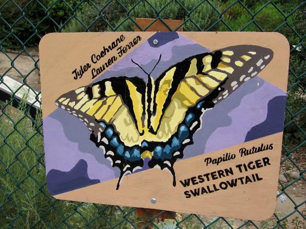 Western Tiger Swallowtail. Tyler Coehrane and Lauren Ferrer.