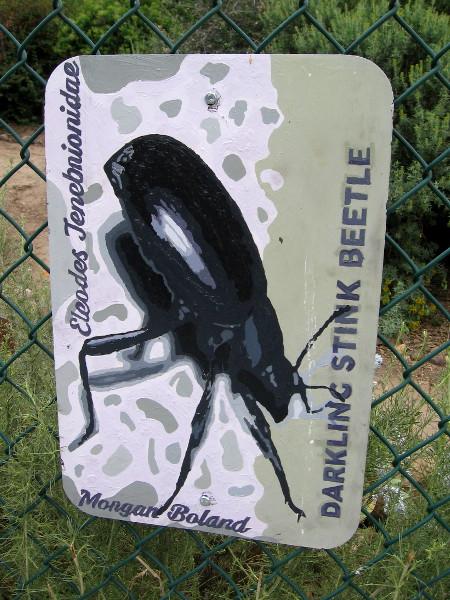 Darkling Stink Beetle. Morgan Boland.