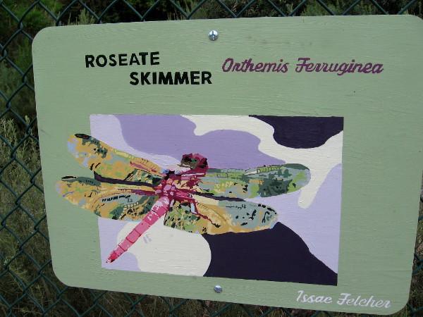 Roseate Skimmer. Issac Felcher.