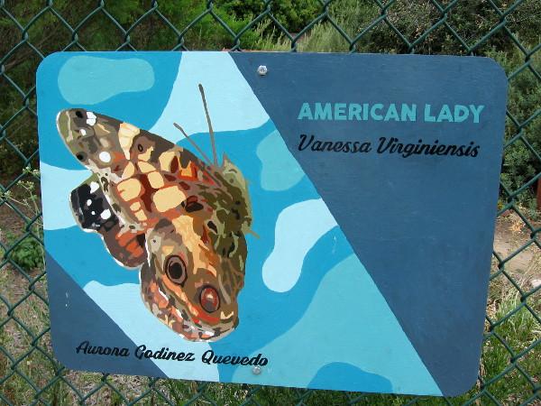 American Lady. Aurora Godinez Quevedo.