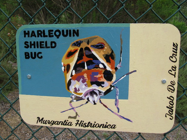 Harlequin Shield Bug. Jakob De La Cruz.