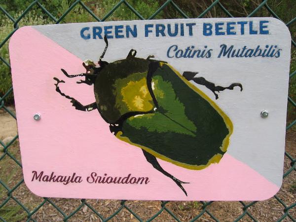 Green Fruit Beetle. Makayla Srioudom.