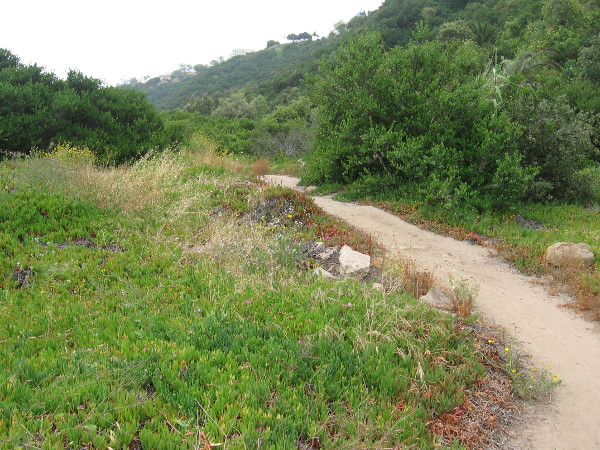 I start up the easy trail. The vegetation in Tecolote Canyon is still green in late spring, after a very rainy winter.