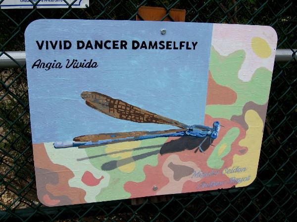 Vivid Dancer Damselfly. Miyoko Seldon and Andrew Bayot.