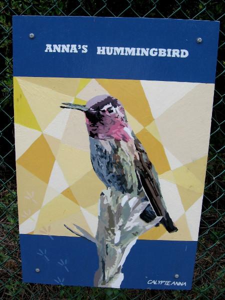 Anna's Hummingbird.